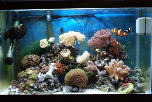 & Up date on my 10 gallon reef - The Reef Tank azcodes.com