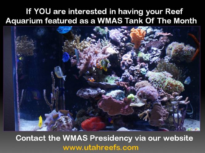 Wasatch Marine Aquarium Society