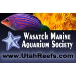 WMAS Club Membership